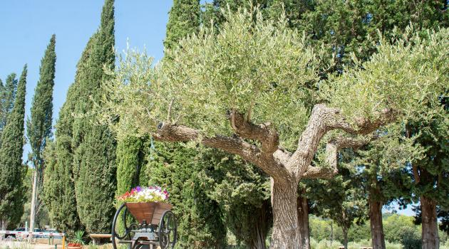 olivier a la cigaliere