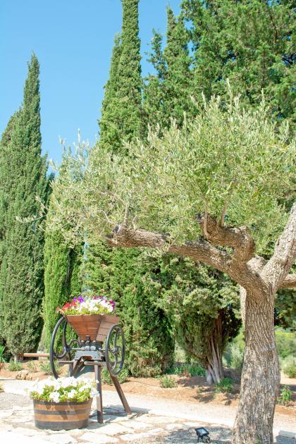 entree olivier